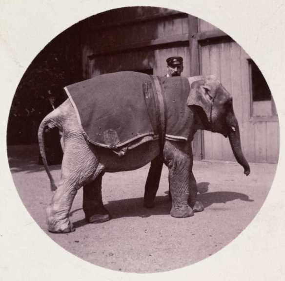 o-ELEPHANT-900